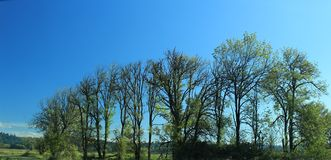 Trees as they look in autumn at Ridgefield National Wildlife Refuge washington state. It was a sunny day with some white clouds in blue sky at the refuge stock image
