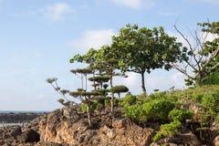Trees on a ashoreline Stock Photos
