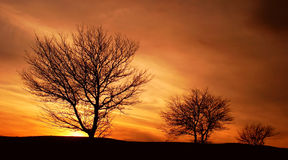 Trees At Sunset Royalty Free Stock Photography