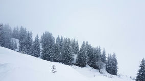 Trees in the Austrian Alps Stock Image