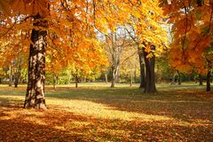 Trees in autumn. In a nice park Royalty Free Stock Photo