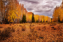 The trees in autumn
