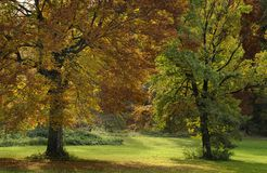 Trees in Autumn Royalty Free Stock Image