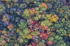 The Trees Of Autumn From Above Royalty Free Stock Photography