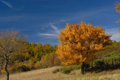 Trees in autumn. Abruzzo national park italy Royalty Free Stock Photos