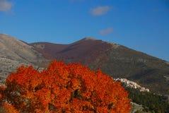 Trees in autumn. Abruzzo national park italy royalty free stock photos