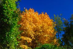 Trees in autumn. Abruzzo national park italy Stock Photo