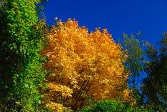 Trees in autumn. Abruzzo national park italy stock photo