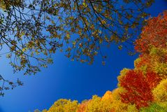 Trees in autumn. Abruzzo national park italy stock image