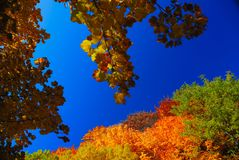 Trees in autumn. Abruzzo national park italy Stock Photos