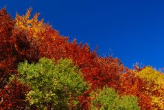 Trees in autumn. Abruzzo national park italy Royalty Free Stock Photography