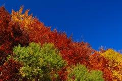 Trees in autumn. Abruzzo national park italy royalty free stock photography