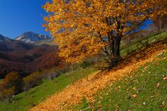 Trees in autumn. Abruzzo national park italy Royalty Free Stock Image