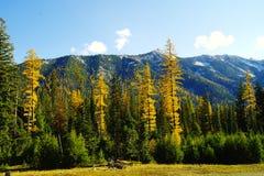 Trees in Autumn attire. Stock Image