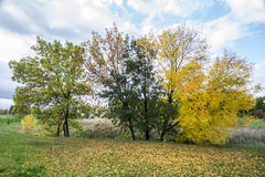 Trees in autumn. Autumn trees on a cloudy day Stock Image