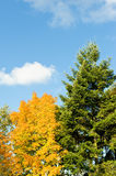 Trees with autumn color Stock Photography