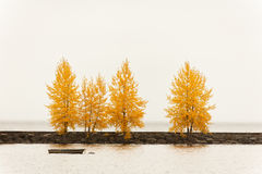 Trees in autumn color on a harbor quay Royalty Free Stock Photos