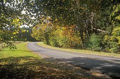 Trees in autumn color line a narrow road near Woodstock, New York Stock Photos