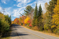Trees in autumn colors Stock Photo