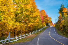 Trees in autumn colors Royalty Free Stock Photography