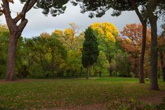 Trees with autumn in colors stock images