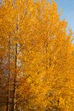 Trees in autumn colors background Stock Image