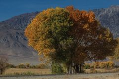 Trees in an Autumn colors at the foot of the hills in California royalty free stock image