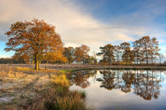Trees in autumn colors reflected in lake Royalty Free Stock Photo
