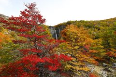 Trees with autumn colors and waterfalls. Chorillo del Salto, El Chalten, Argentina royalty free stock photography