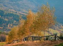 Trees in autumn. The coloured leaves on the trees create an indescribable backdrop to the panorama of mountains stock images