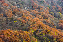 Trees in autumn colours Royalty Free Stock Images