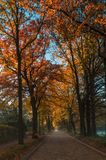 Autumn has arrived with colours Royalty Free Stock Image