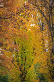 Trees in autumn. Details of some trees in autumn with red an yellow leaves stock images