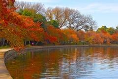 Trees in autumn foliage along Tidal Basin walkway, Washington DC. Stock Images