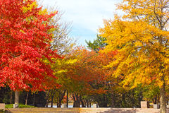 Trees in autumn foliage at Franklin Delano Roosevelt Memorial in Washington DC. Colorful deciduous trees in park near Tidal Basin on sunny fall morning Royalty Free Stock Images