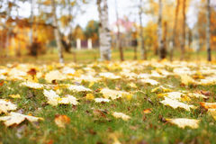 Trees in the autumn forest. Fall park. Rich colors. Royalty Free Stock Image