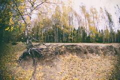 Trees in the autumn forest. Fall woods. Royalty Free Stock Photo