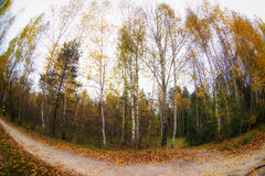 Trees in the autumn forest. Fall woods. Royalty Free Stock Photos