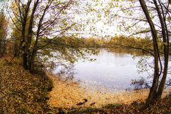 Trees in the autumn forest. Fall woods. Rich colors. Royalty Free Stock Photos