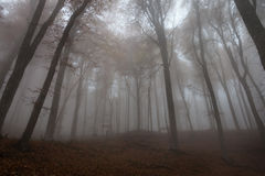 Trees in the autumn forest in the fog Royalty Free Stock Photography