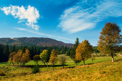 Trees in autumn forest . Stock Images