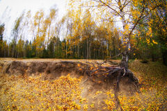 Trees in the autumn forest. Rich colors. Royalty Free Stock Image
