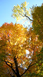Trees in autumn forest scene Stock Photography