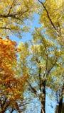Trees in autumn forest scene Stock Photo