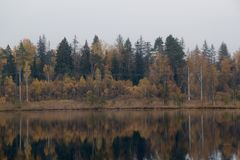 Autumn forest near the lake royalty free stock image