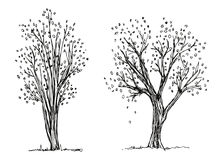 Trees autumn hand drawing vector. The foliage is falling. Sketch Stock Photos