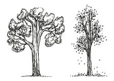 Trees autumn hand drawing vector. The foliage is falling. Sketch illustration Royalty Free Stock Photos