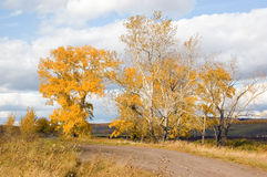 Trees with autumn leaves. Trees with autumn yellow leaves stock photography