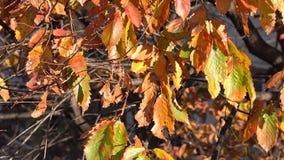 Trees in autumn stock footage