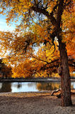 The trees in autumn Stock Photography
